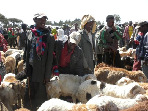 Testing of the tools with sheep farmers around Addis Ababa in Ethiopia (photo credits: Tamsin Dewé)