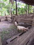 Kamuli_farm1